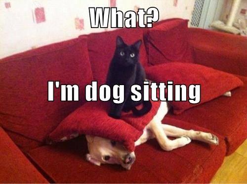 cat,dogs