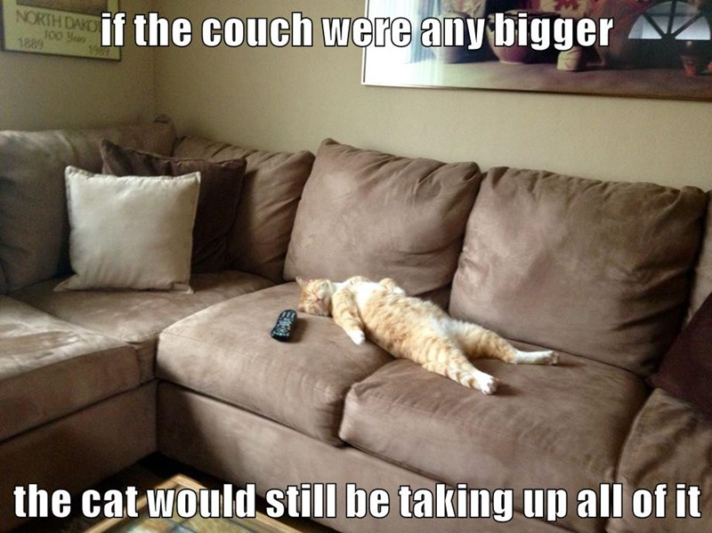 animals cat lazy couch