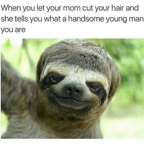 funny animal image of sloth with bad hair