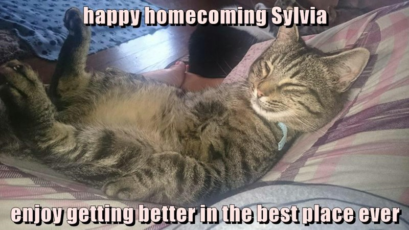 happy homecoming Sylvia  enjoy getting better in the best place ever