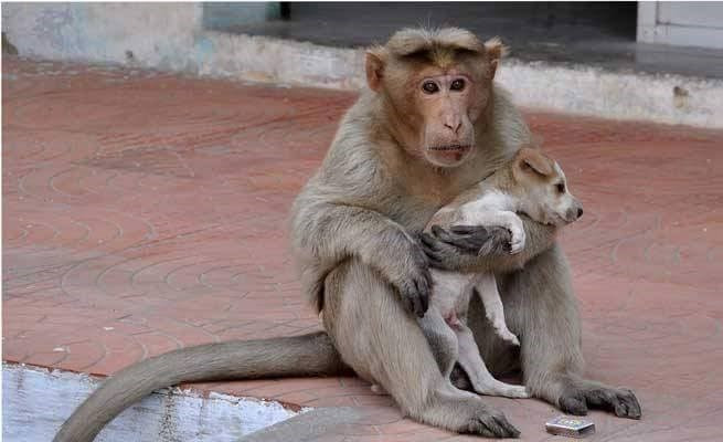 cute monkey dogs Adorable Monkey Multiplies His Cuteness by Adopting a Puppy