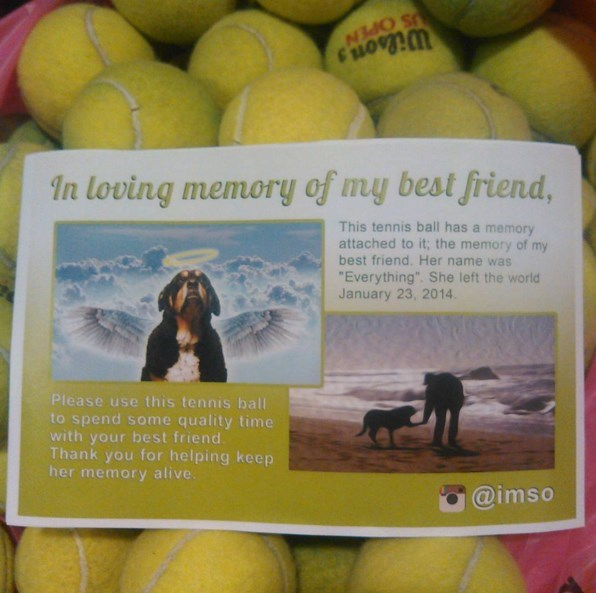 cute dogs friends Instagram User Memorializes His Best Friend By Sending Out Free Tennis Balls