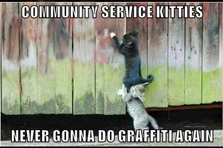 COMMUNITY SERVICE KITTIES  NEVER GONNA DO GRAFFITI AGAIN