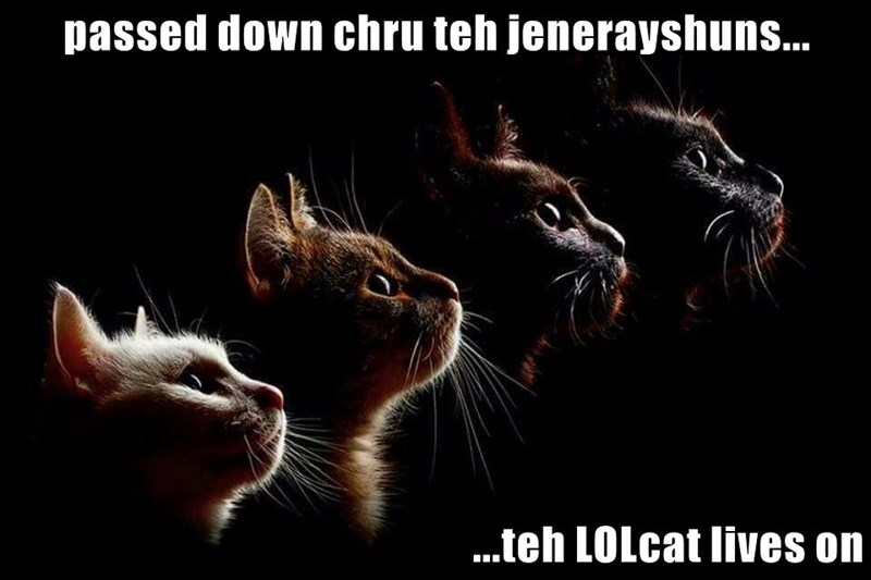 passed down chru teh jenerayshuns...  ...teh LOLcat lives on