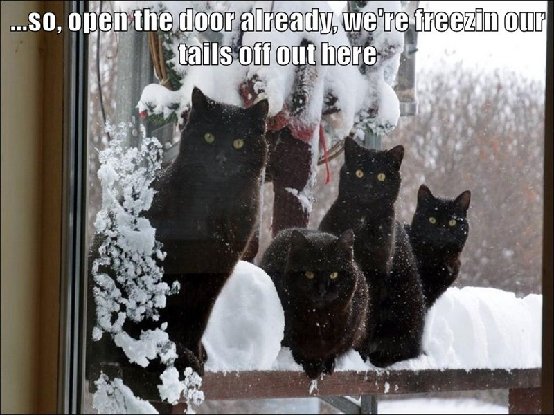 ...so, open the door already, we're freezin our tails off out here