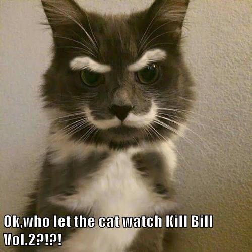 Ok,who let the cat watch Kill Bill Vol.2?!?!