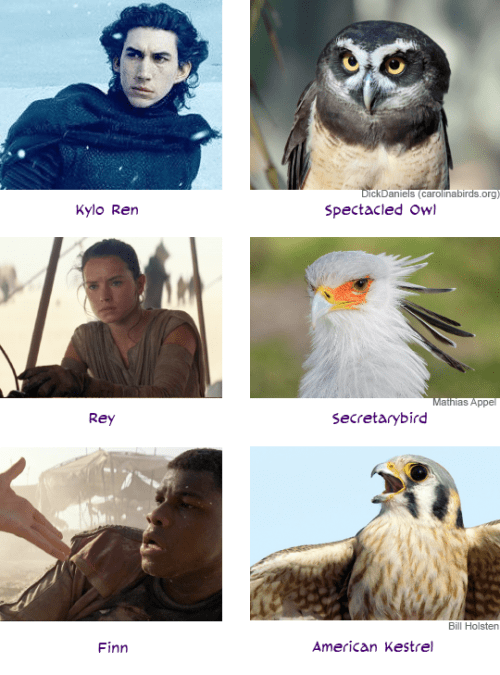 funny animal image of star wars characters as birds