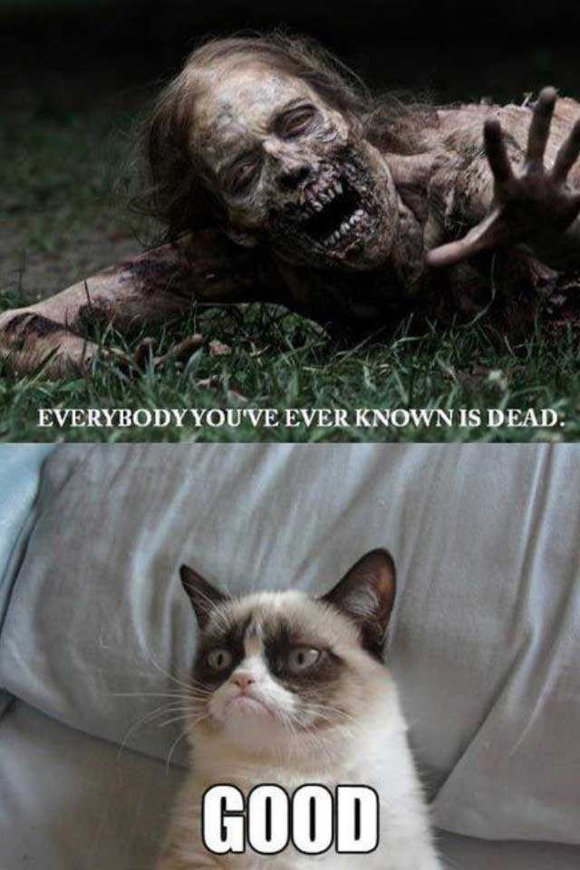 walking dead grumpy cat