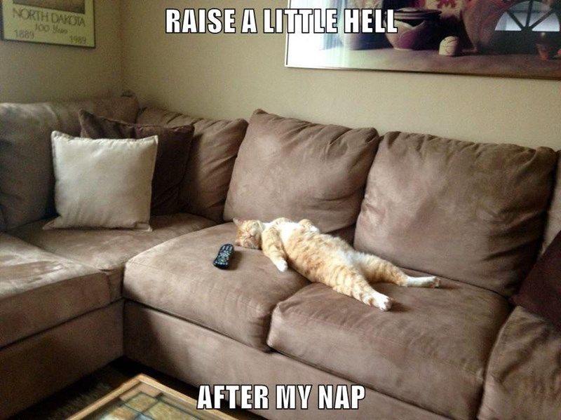 animals cat after nap hell raise caption - 8607750656