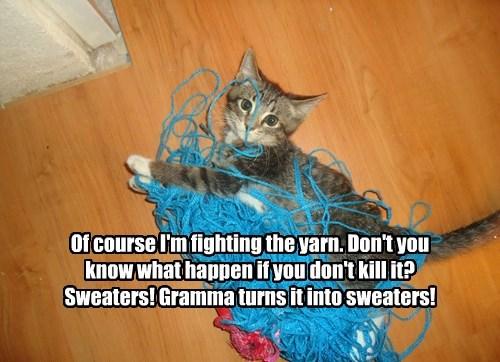 sweaters turns kitten grandma yarn fighting caption