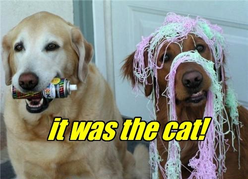 cat,dogs,silly string,was,it,caption