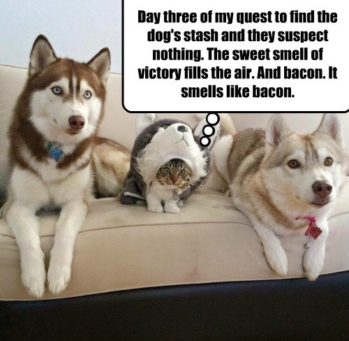 smells dogs suspect victory quest nothing caption day three bacon