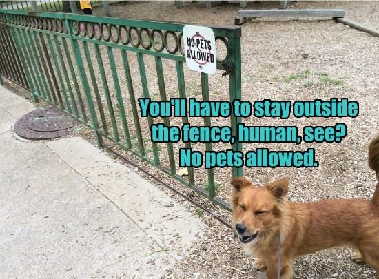 dogs stay pets human outside caption no - 8607957760