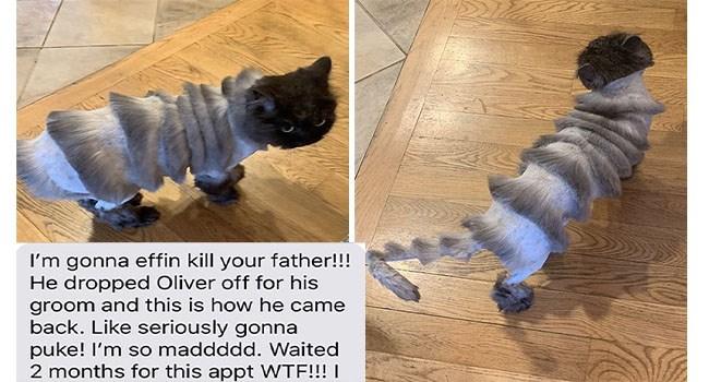 Funny cat haircut