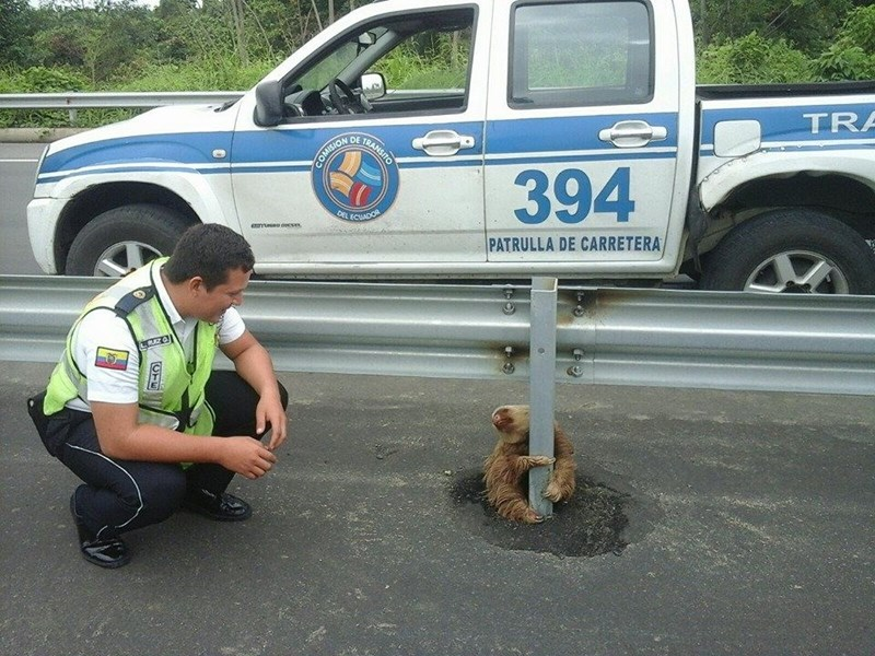 The Cutest Sloth Got Arrested for Jaywalking