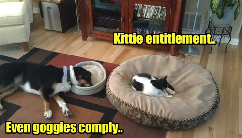 dogs entitlement comply goggies kitty caption - 8608055296