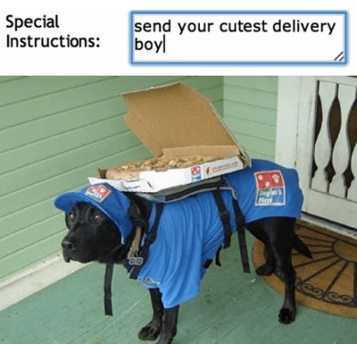 cute animal image of dog delivering pizza