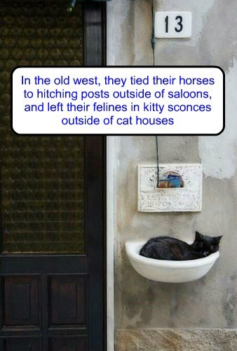 little known wild west cat fact