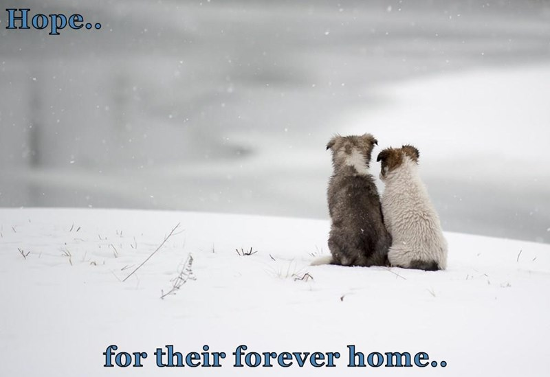 dogs,hope,forever home,caption