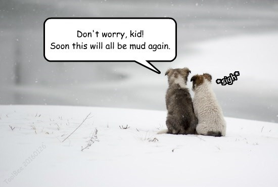 worry kid SOON puppies again mud dont caption - 8608157440