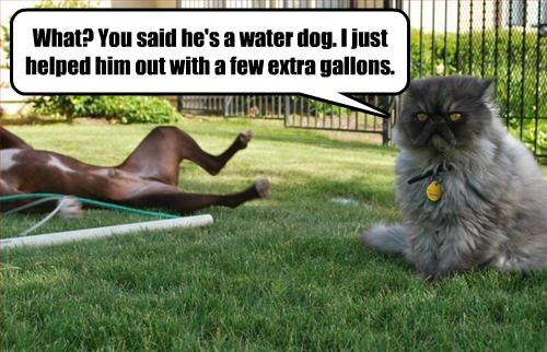 What? You said he's a water dog. I just helped him out with a few extra gallons.