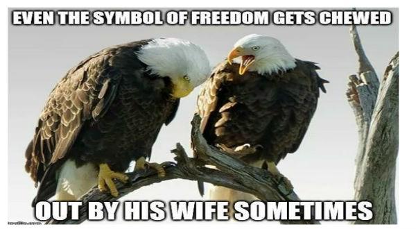 American eagle memes