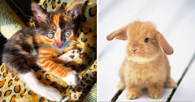 cute animals cuteness overload
