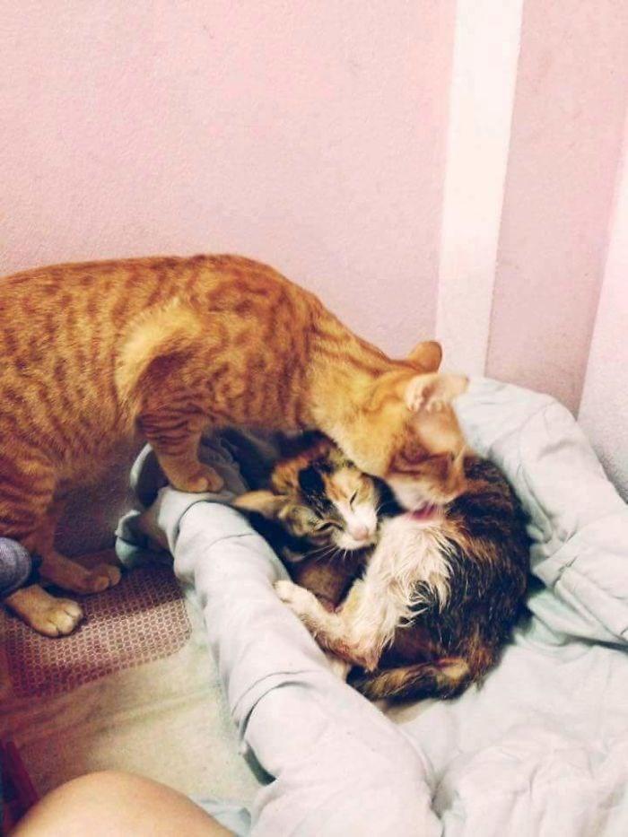 cat kittens aww