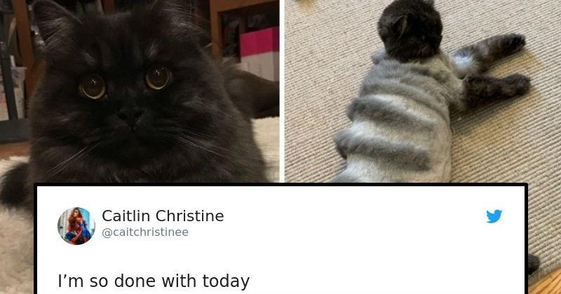 cat grooming, pet grooming, funny cats, fails,
