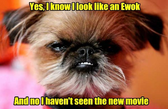 Yes, I know I look like an Ewok And no I haven't seen the new movie