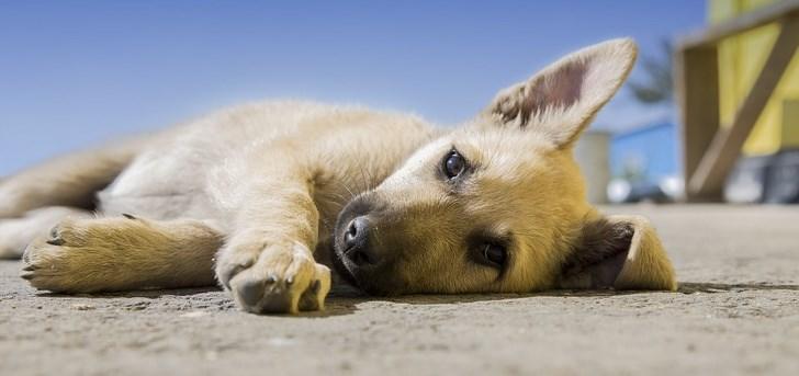 dogs Netherlands holland amazing stray - 8621829
