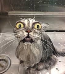funny cats compilation videos - shocked cat in the kitchen sink.