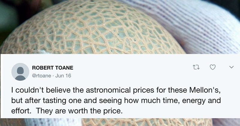 expensive melons, internet reacts to japanese melons,