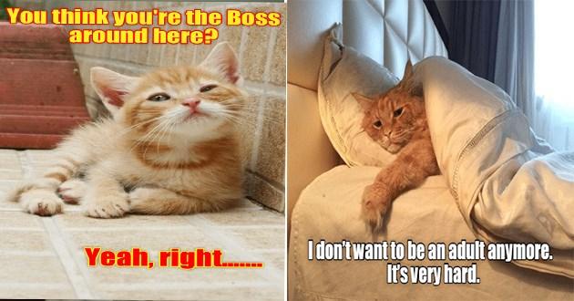 funny cat memes lolcats