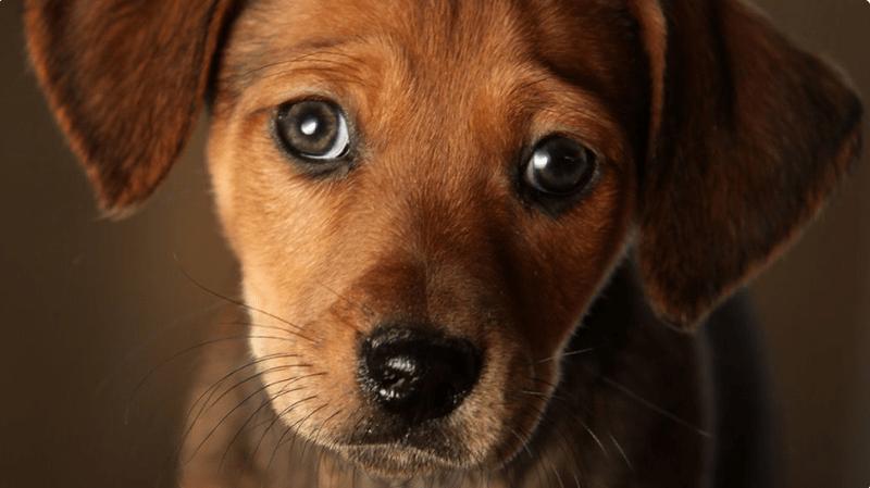 cute dog eyes