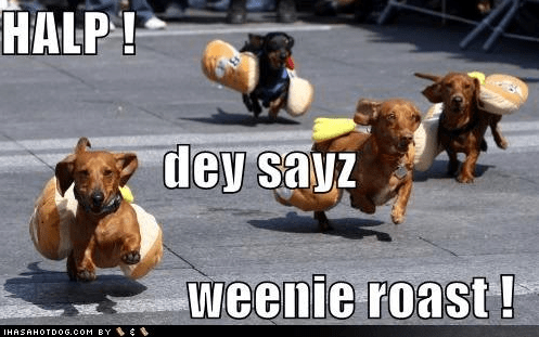 hot dog,dogs,adorable,wiener dogs,dachshund,hot dogs,america