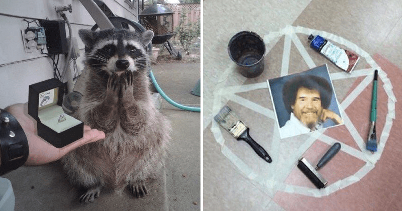 Blessed images, animals, cute animals, wholesome photos.