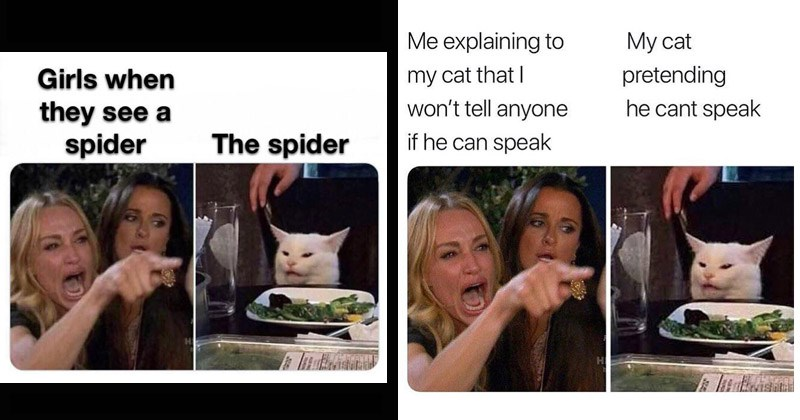'Two Women Yelling At A Cat' Memes Are Overly Aggro