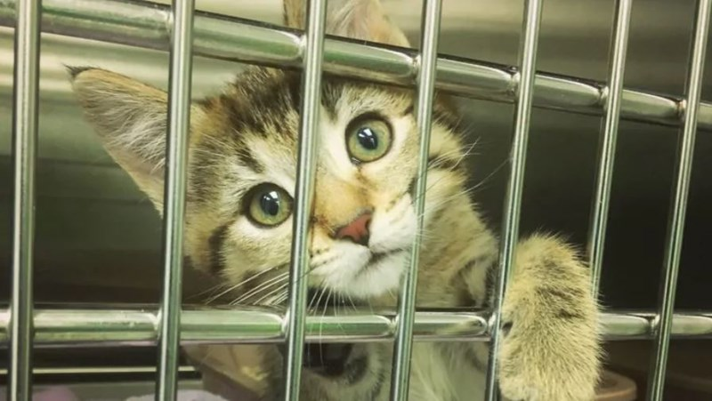cat looking through bars of cage