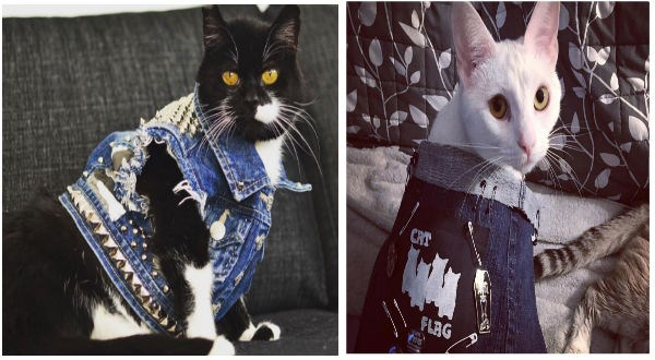 cats wearing heavy metal vests