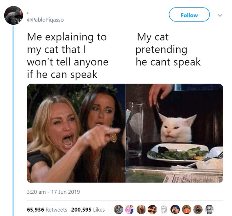 Tweet about a cat