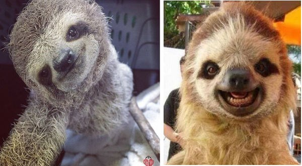 two sloths smiling