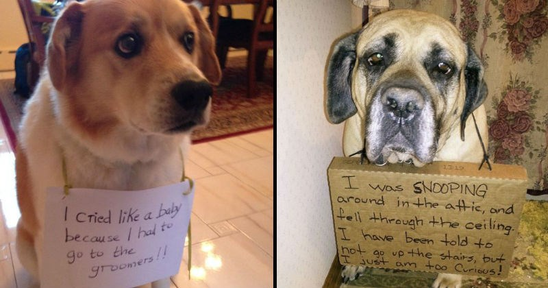 dogs with signs shaming them for their bad behavior