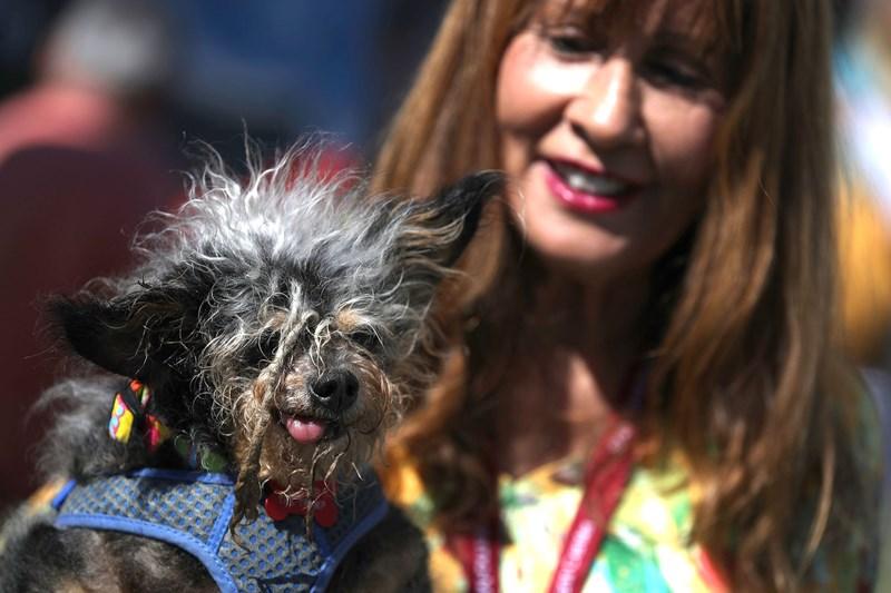 ugly dog photo