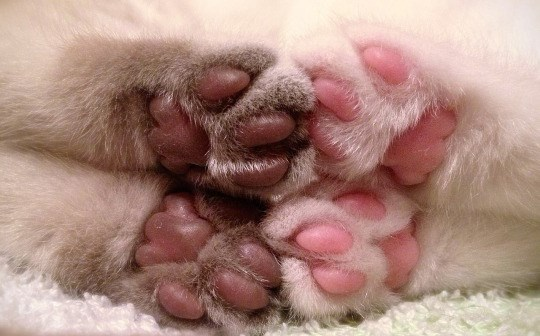 photo of cat paws