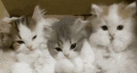 kitten gifs cute