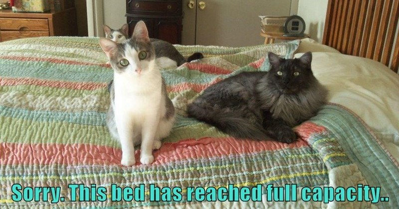 funny cat memes from LOLcats, basically funny pictures of cats with captions on them