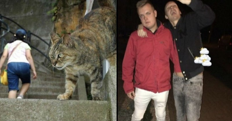 pic of huge cat and man with his hand inside another man's pants