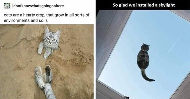 caturday cat memes funny