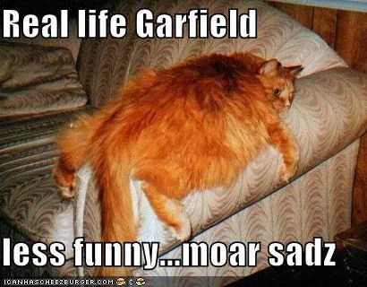 Real Life Garfield Less Funny Moar Sadz Cheezburger Funny Memes Funny Pictures